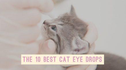 The 10 Best Cat Eye Drops _ Eye Drops for Cats