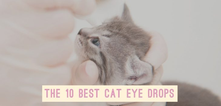 The 10 Best Cat Eye Drops _ Eye Drops for Cats
