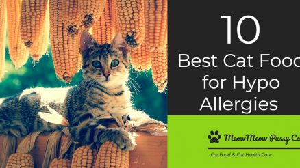 The 10 Best Cat Food for Hypo allergies