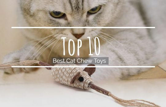 Top 10 Best Cat Chew Toys
