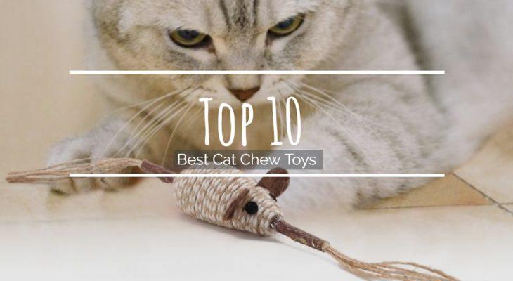 Top 10 Best Cat Chew Toys