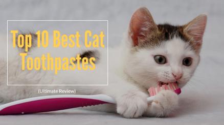 Top 10 Best Cat Toothpastes