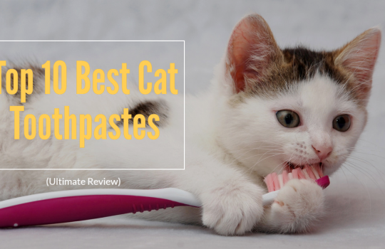 Top 10 Best Cat Toothpastes