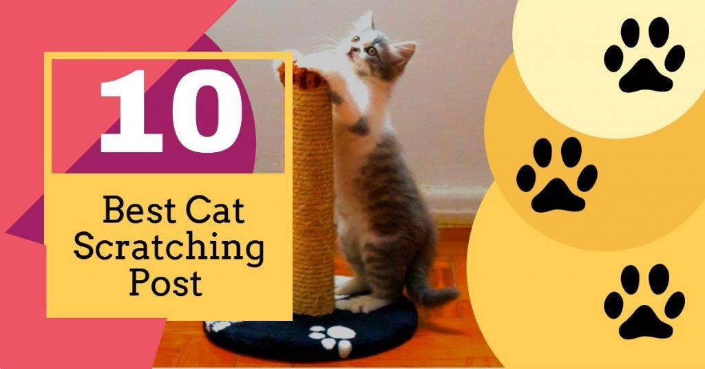 Best Cat Scratching Post