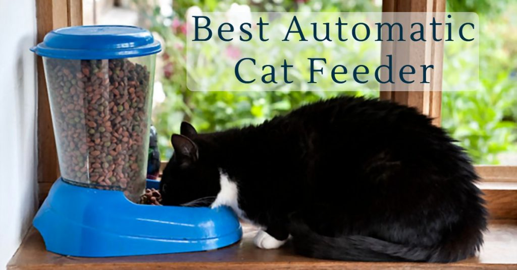Top 5 Best Automatic Cat Feeder