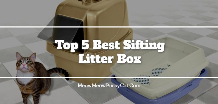 Top 5 Best Sifting Litter Box