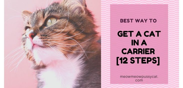 Best Way to Get a Cat in a Carrier [12 Steps]
