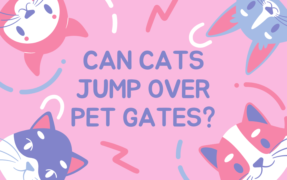 Can Cats Jump Over Pet Gates