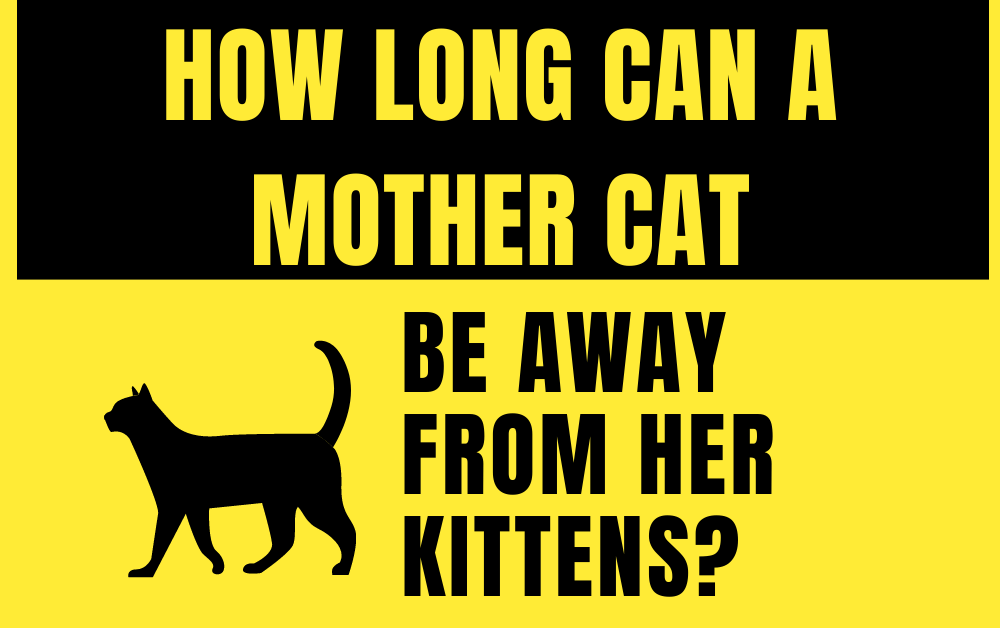 How Long can a Mother Cat be Away from her Kittens