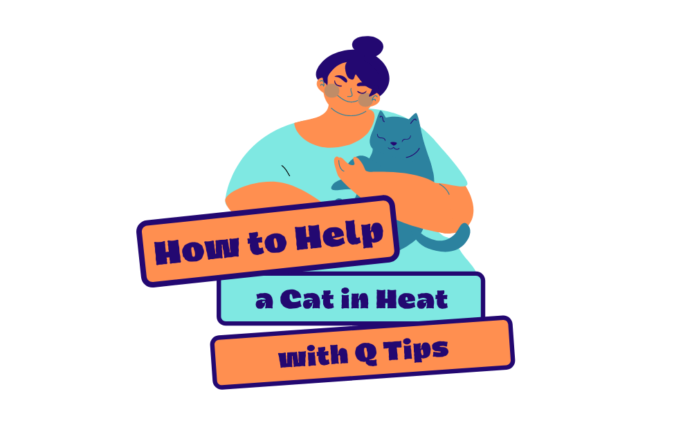 How to Help a Cat in Heat with Q Tips