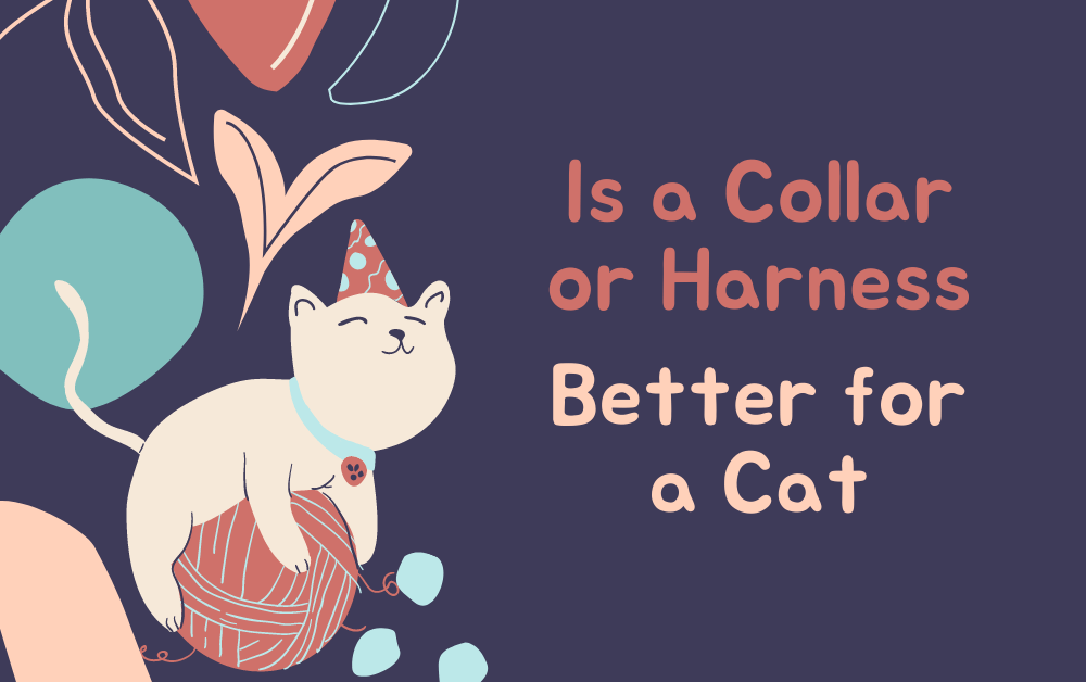 Is a Collar or Harness Better for a Cat