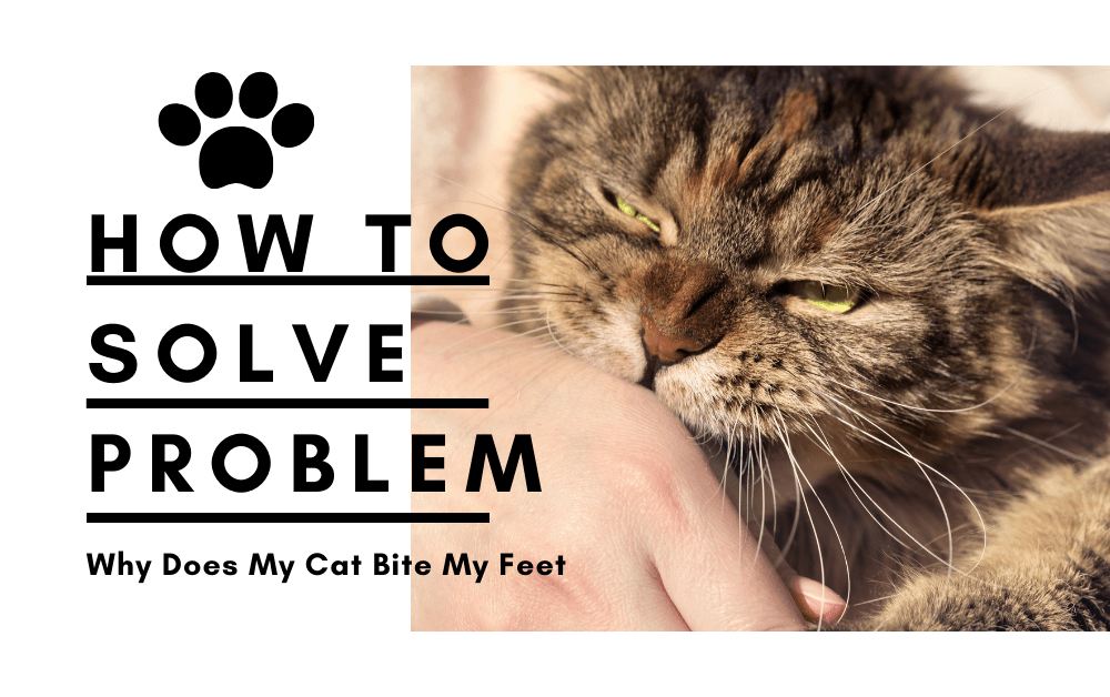 How to Solve Why Does My Cat Bite My Feet Problem